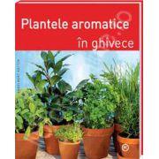 Plante aromatice in ghivece