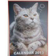 Calendar triptic 2013 de perete (Imagini cu pisici)
