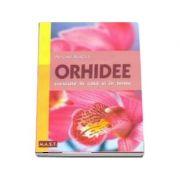 Orhidee. Crescute in casa si in birou