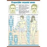 Proportiile corpului uman - Contrastele cromatice. Plansa murala