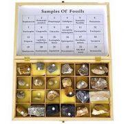 Set 24 de fosile