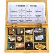 Set divizarea fosilelor - 12 reproduceri de fosile