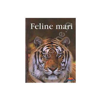 Feline mari
